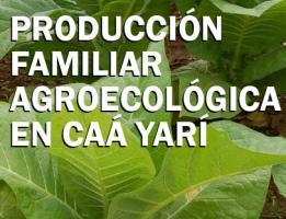 Producción Familiar Agroecológica en Caá Yarí