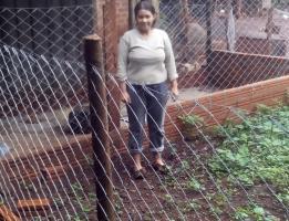 Avicultura Familiar: Producción de aves con doble propósito