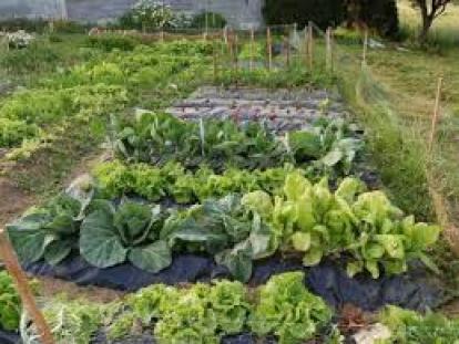 Huerta Agroecológica Comunitaria